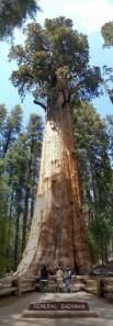 [general-sherman-sequoia.jpg]