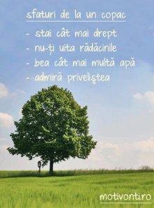 sfaturi-copac
